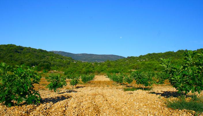 Terra Dalmatia